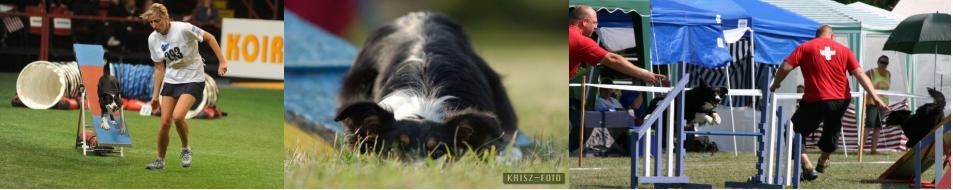 dog – sports
